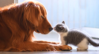 Pet Connect Animal Travel. Image of cat and dog nose to nose.