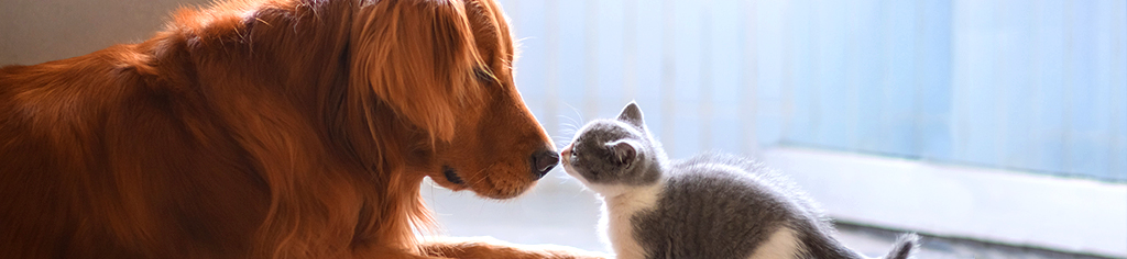 cute dog and cat nose to nose